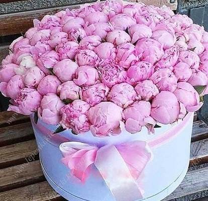 151 peonies in a box