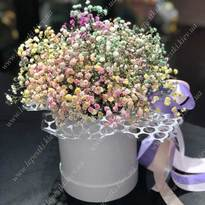 Rainbow gypsophila in a box