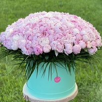 151 pink peony in a box